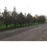 Belterületi utak és járdák korszerűsítése (19)
